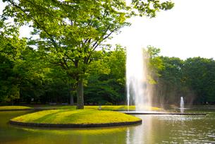 初夏の代々木公園の写真素材 [FYI02838696]