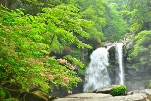 二ノ滝とタニウツギの花の写真素材 [FYI02838698]