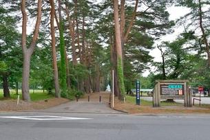 松、杉並木(松)の写真素材 [FYI02838748]