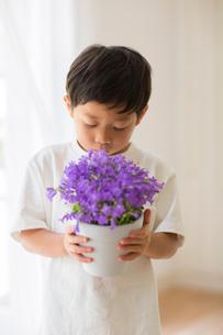 室内で鉢植えの花を持つ子供の写真素材 [FYI02838901]