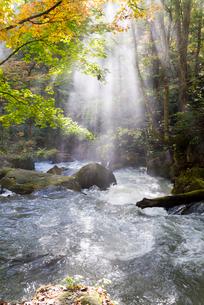 朝陽のシャワーを浴びる紅葉の奥入瀬渓流の写真素材 [FYI02839006]