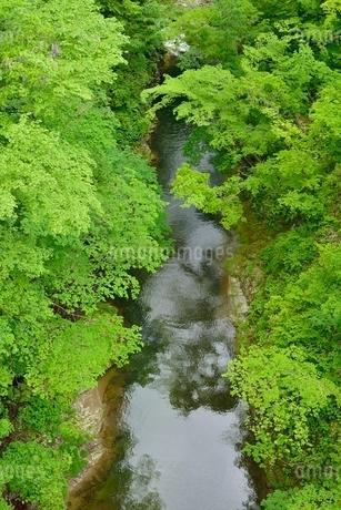 新緑と渓流の写真素材 [FYI02839062]