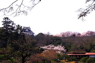 4月 桜咲く彦根城天守閣と玄宮園の写真素材 [FYI02839098]