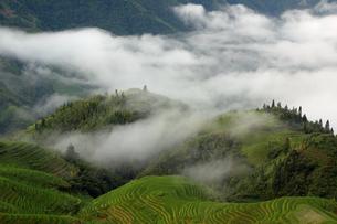 中国・龍勝の棚田風景の写真素材 [FYI02839102]