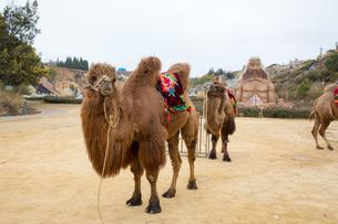 陸良彩色沙林(中国雲南省)の写真素材 [FYI02839107]