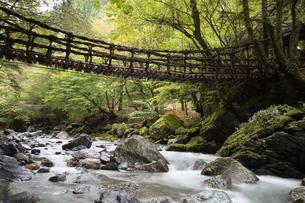 四国・奥祖谷のかずら橋の写真素材 [FYI02839160]