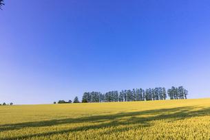 丘の町・美瑛の田園風景の写真素材 [FYI02839168]