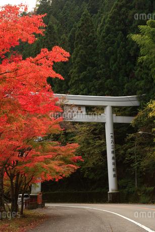 面合渓谷(紅葉)の写真素材 [FYI02839209]