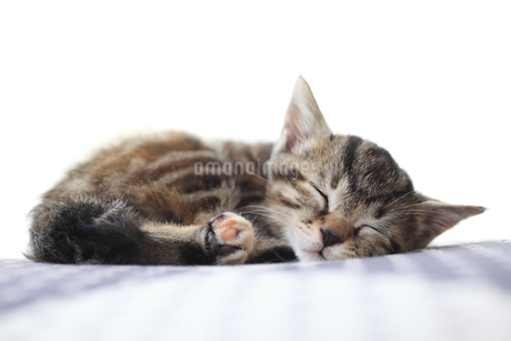 深い眠りに就いた子猫の写真素材 [FYI02839311]