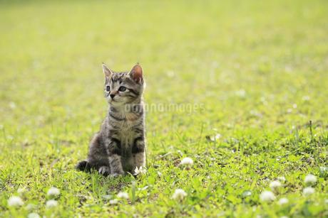 芝生にたたずむ子猫の写真素材 [FYI02839379]
