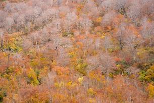 秋の月山 の写真素材 [FYI02839389]