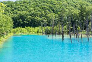 美瑛白金の青い池の写真素材 [FYI02839486]