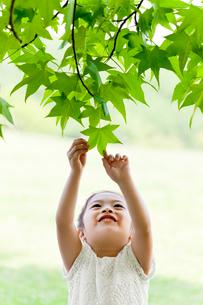 公園で木の葉に触れる女の子の写真素材 [FYI02839506]