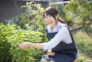 畑の中で笑っている女性の写真素材 [FYI02839589]