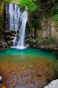 桑の木の滝の写真素材 [FYI02839622]