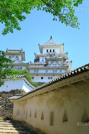 新緑の姫路城 将軍坂から望む天守群の写真素材 [FYI02839647]