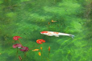 モネが描いた絵のような池の写真素材 [FYI02839652]