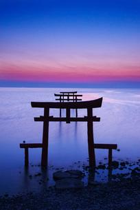 大魚神社の海中鳥居の朝の写真素材 [FYI02839654]