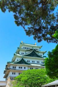 名古屋城の写真素材 [FYI02839757]