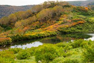 大学沼の紅葉の写真素材 [FYI02839763]