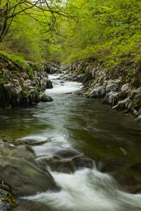 新緑の中津川渓谷の写真素材 [FYI02839792]