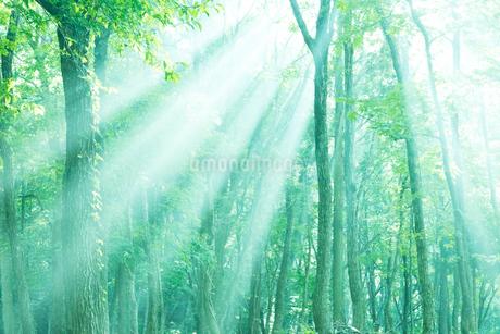 森林浴木もれ日の写真素材 [FYI02839828]