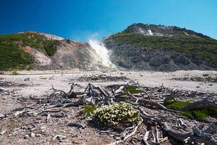 硫黄山とエゾイソツツジの写真素材 [FYI02839834]