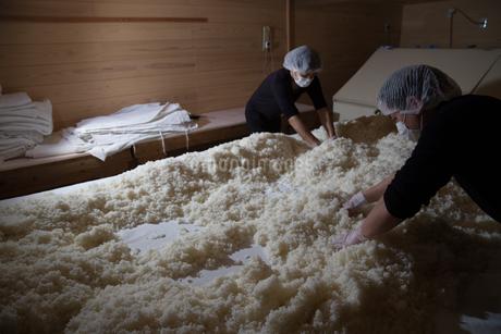 製麹(麹造り)の写真素材 [FYI02839866]