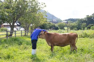 乳牛を手入れする30代男性の写真素材 [FYI02839867]