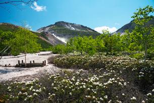 硫黄山とエゾイソツツジの写真素材 [FYI02839987]