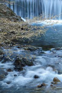 渓流を背景にさりげなく咲く桜の写真素材 [FYI02839994]