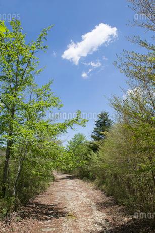 新緑を背景に続く道の写真素材 [FYI02840010]