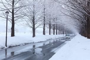 冬のメタセコイア並木に降雪の写真素材 [FYI02840017]