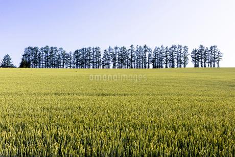 丘の町・美瑛の田園風景の写真素材 [FYI02840034]