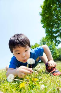 公園でタンポポを吹こうとする男の子の写真素材 [FYI02840041]