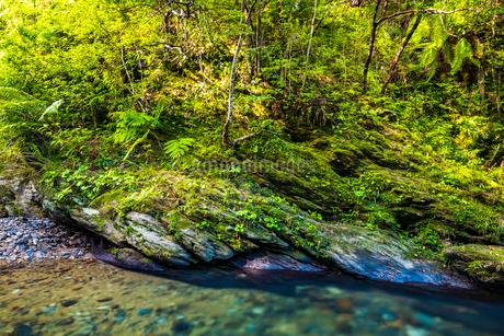 やんばるの川の写真素材 [FYI02840077]