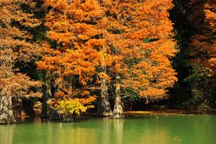 篠栗九大の森の写真素材 [FYI02840082]