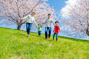 桜の咲く土手を下る4人家族の写真素材 [FYI02840235]