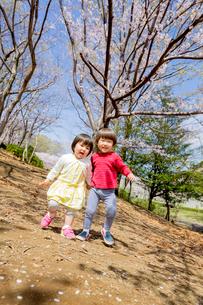 桜の咲く公園で遊ぶ兄と妹の写真素材 [FYI02840236]