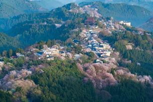 満開の吉野の桜の写真素材 [FYI02842032]