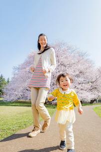 桜の咲く公園で遊ぶ母親と娘の写真素材 [FYI02842690]