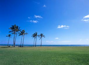 ワイアホレビーチパーク オアフ島 ハワイの写真素材 [FYI02843519]