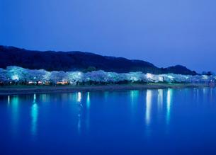北上展勝地の夜桜の写真素材 [FYI02844679]