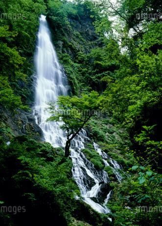 天滝の写真素材 [FYI02845418]