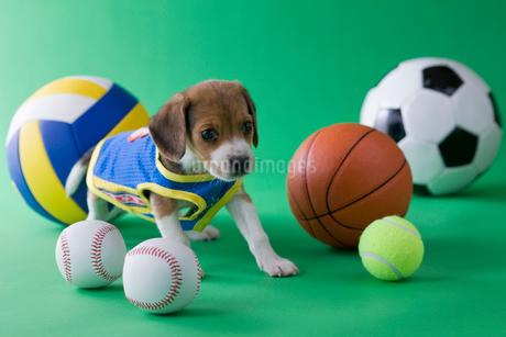 ビーグルのスポーツイメージの写真素材 [FYI02845695]