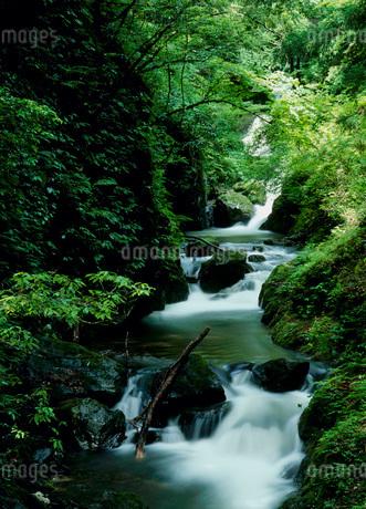 天滝渓谷の写真素材 [FYI02845752]