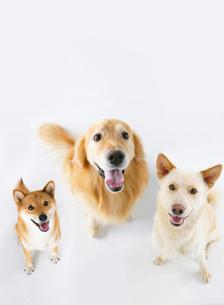 3匹の犬の写真素材 [FYI02845933]