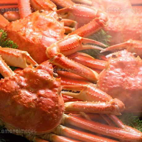 ズワイ蟹の写真素材 [FYI02846525]