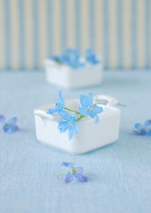 ストライプの壁バックの白い食器と青い花の写真素材 [FYI02846673]