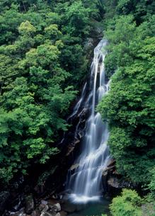 荒滝と緑の写真素材 [FYI02846852]